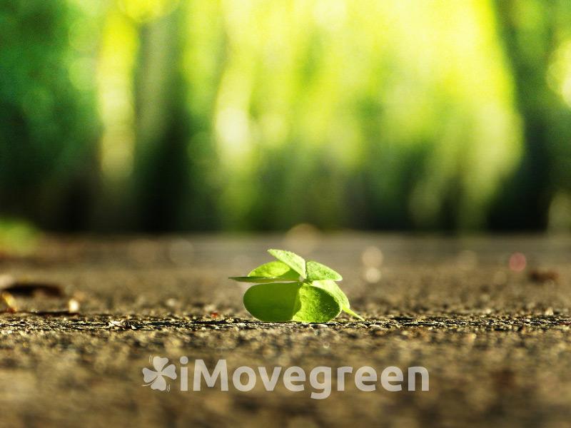6 mesi di iMovegreen